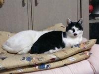 cat_003