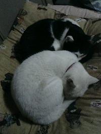 cat_006