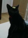 cat_007