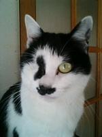Cat_008_1