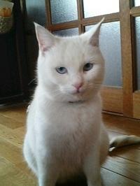 cat_010