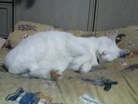 cat_011