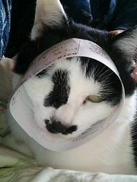 cat_012