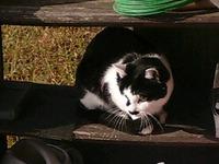 cat_013