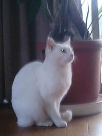 cat_015