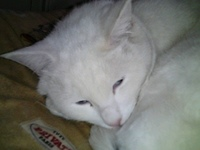 cat_020