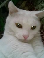 Cat_022