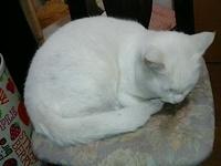 cat_024