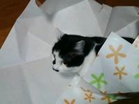 cat_025