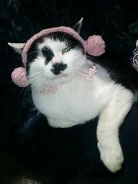 cat_027