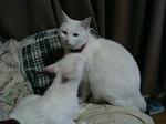 cat_029
