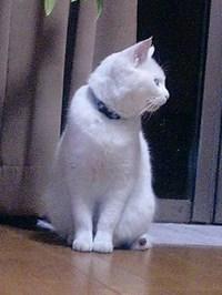 cat_032