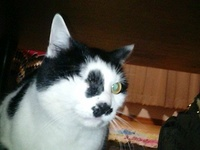 cat_034