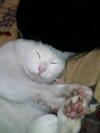 cat_037