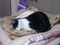 cat_039