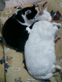 cat_040
