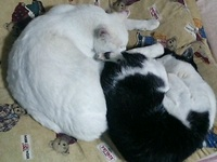 cat_042