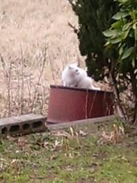 cat_047