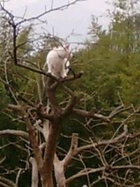 cat_048