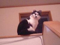 cat_049