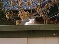 cat_050