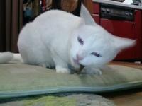cat_051