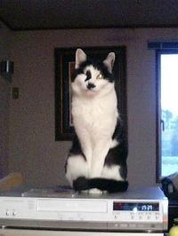 cat_056