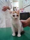 cat_059