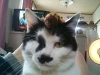 cat_064