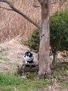 Cat_072