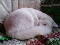 Cat_078