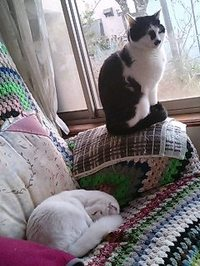 Cat_079