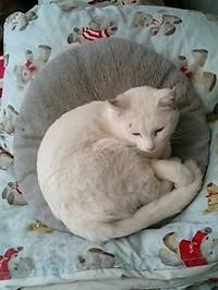 Cat_082