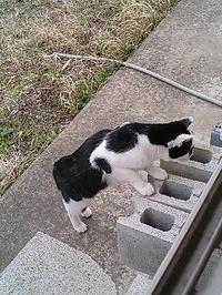 Cat_087_1