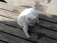 Cat_088