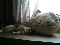 cat_090