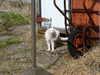 Cat_091