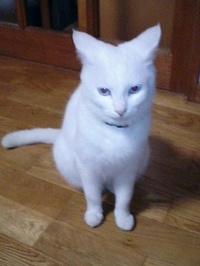 cat_094