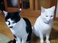 cat_095