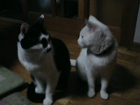 cat_096