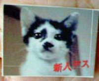 cat_099