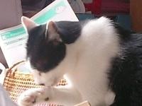 cat_101