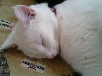 cat_102