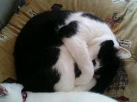 cat_103