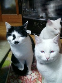 cat_104