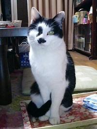 cat_105