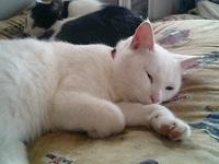 cat_106