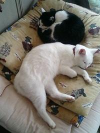 cat_107