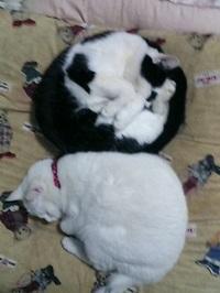 cat_108