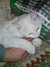 cat_109